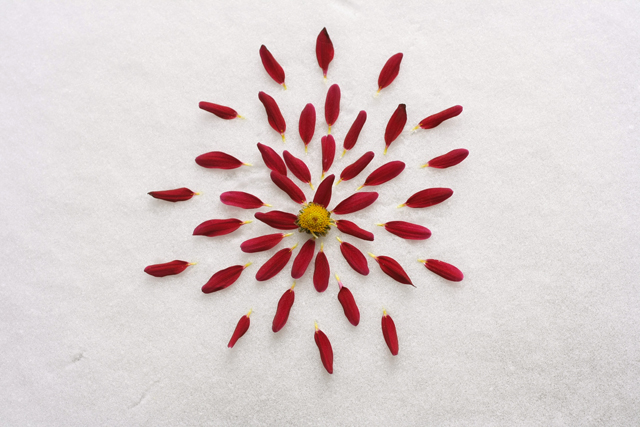 deconstructedflower-misselainious